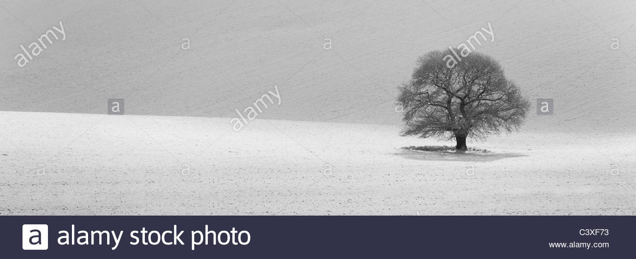 Isolierte Baum im Schnee bedeckt Landschaft Stockbild