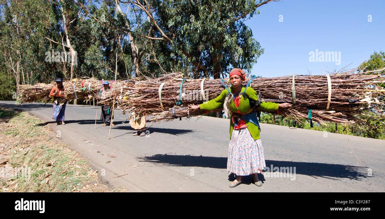 Gemeinsame Äthiopische Frauen mit Bündeln von Brennholz in die Entoto Berge #DW_34