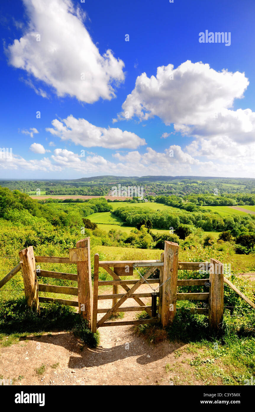 Ranmore Gemeinsame an einem sonnigen Sommertag, Surrey Hills Dorking England Großbritannien Stockbild