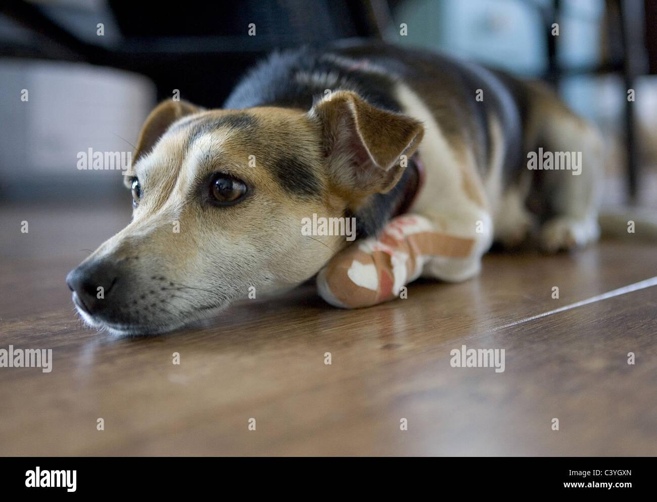 Bein gips hund gebrochen gebrochenes Bein