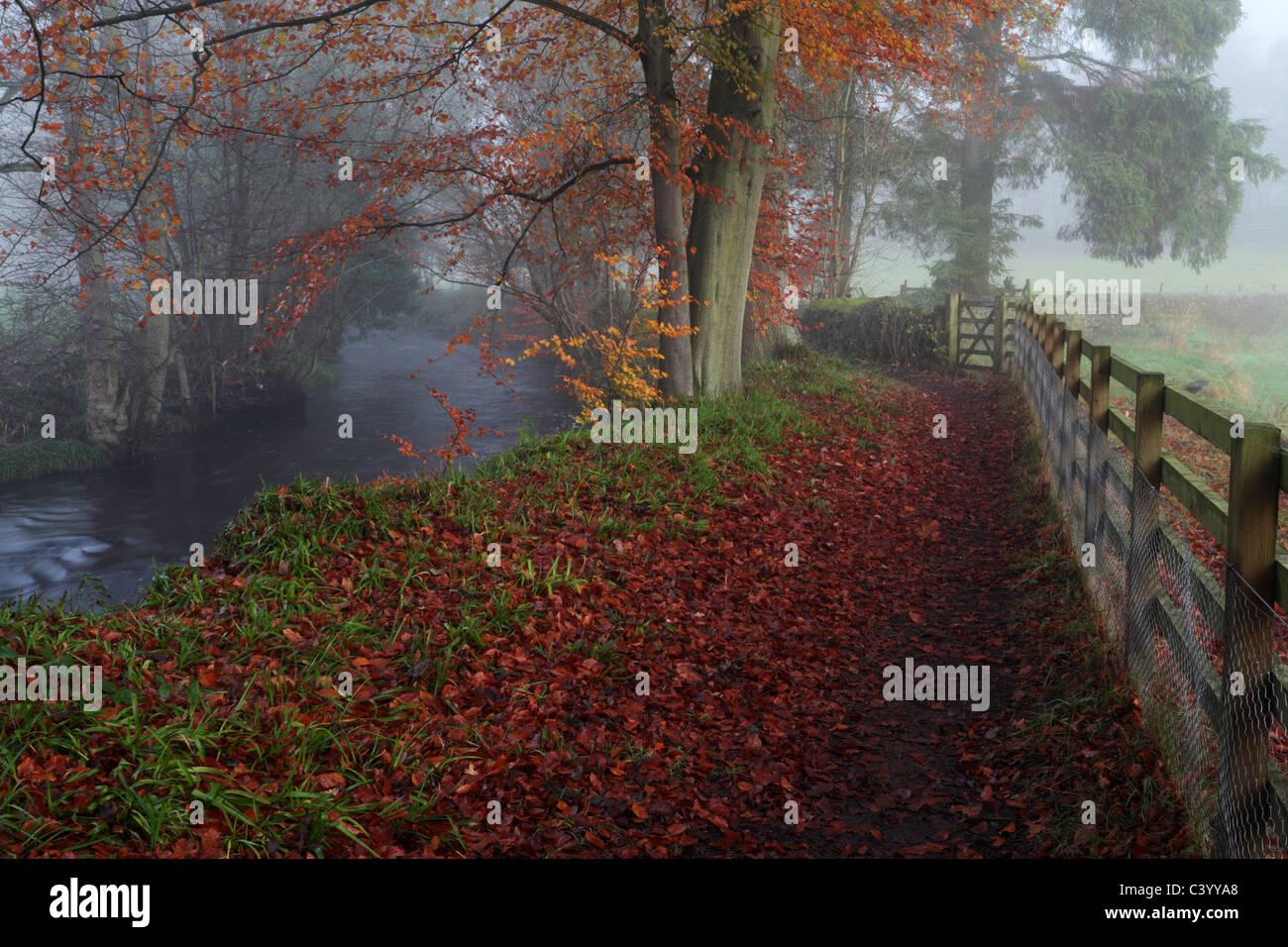 Nebligen Herbstmorgen zu Fuß entlang dem Fluß Washburn in der Nähe von Blubberhouses in Yorkshire, Stockbild
