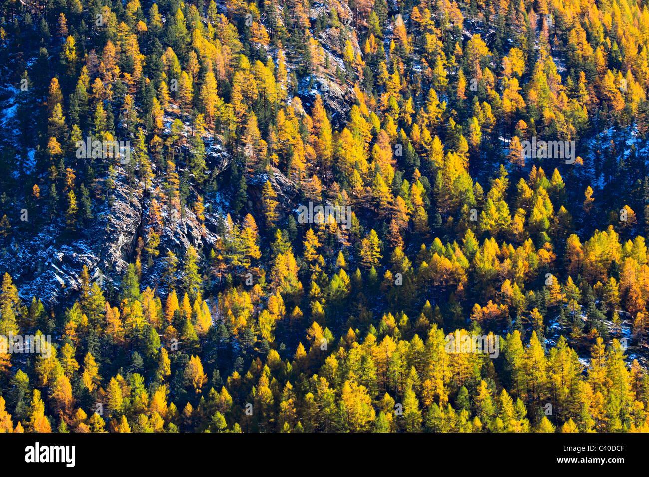 Alpen Schneiden Teil Baum Berg Berge Pflanzen Baume Detail