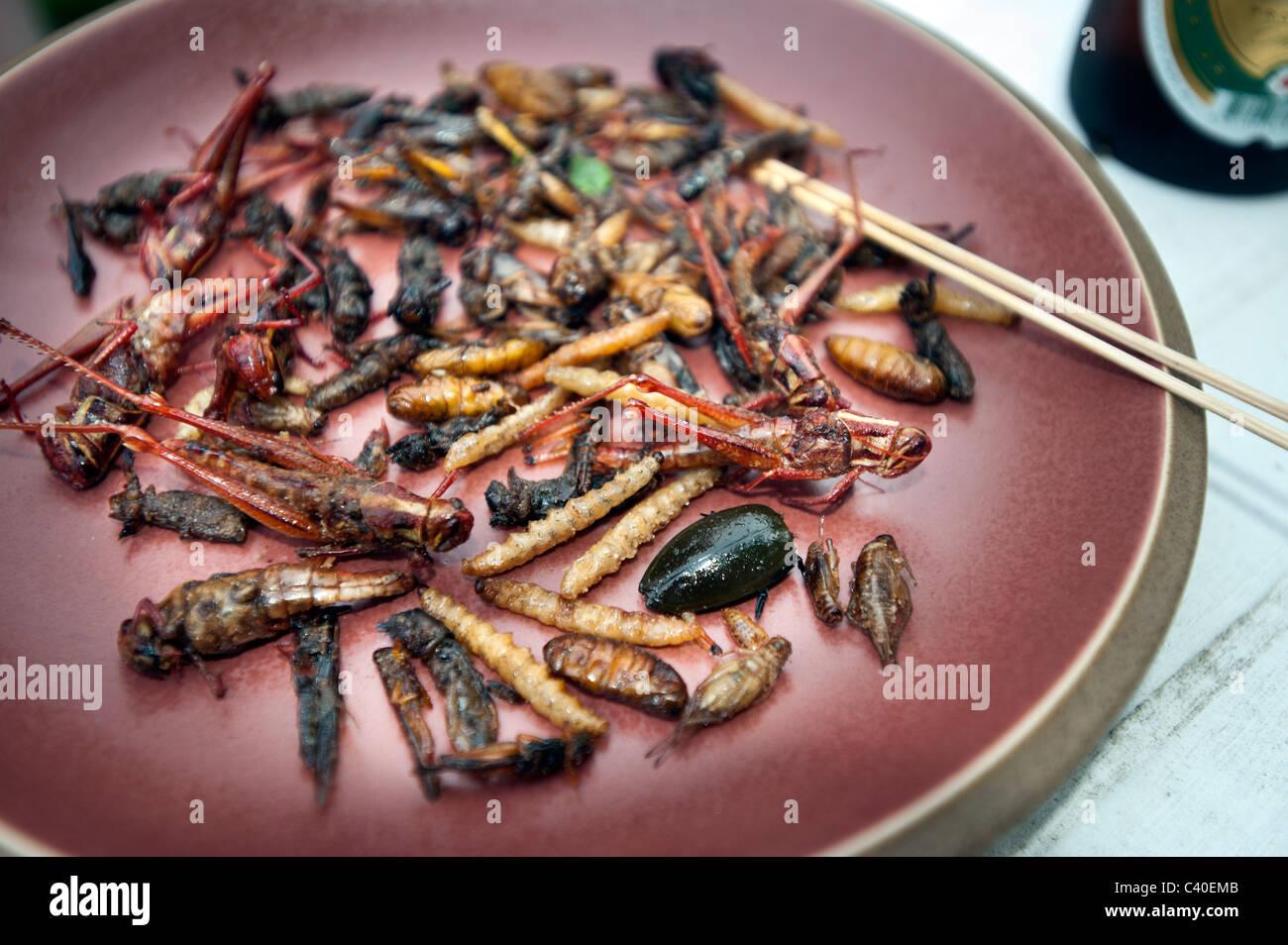 insekten essen essen gebraten auf platte thailand thai thail ndischen snack insekten leckere. Black Bedroom Furniture Sets. Home Design Ideas