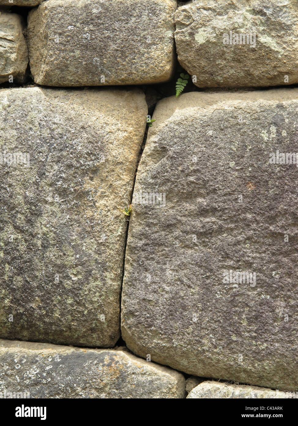 Inca Steinmauer mit Farn an Ruinen von Machu Picchu, Peru Stockbild