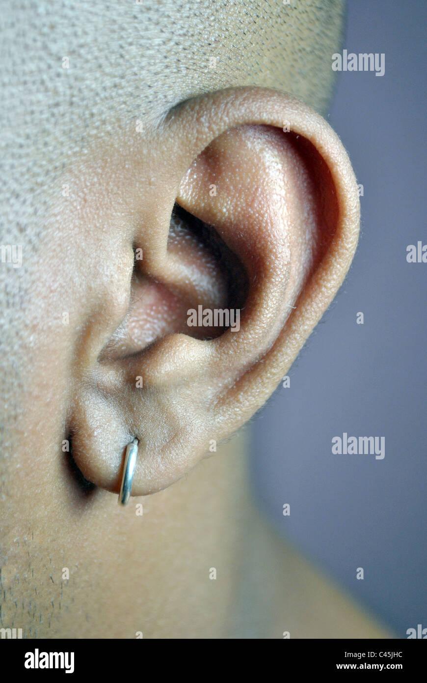 Nahaufnahme des menschlichen Ohres Anatomie Ohrlochstechen ...