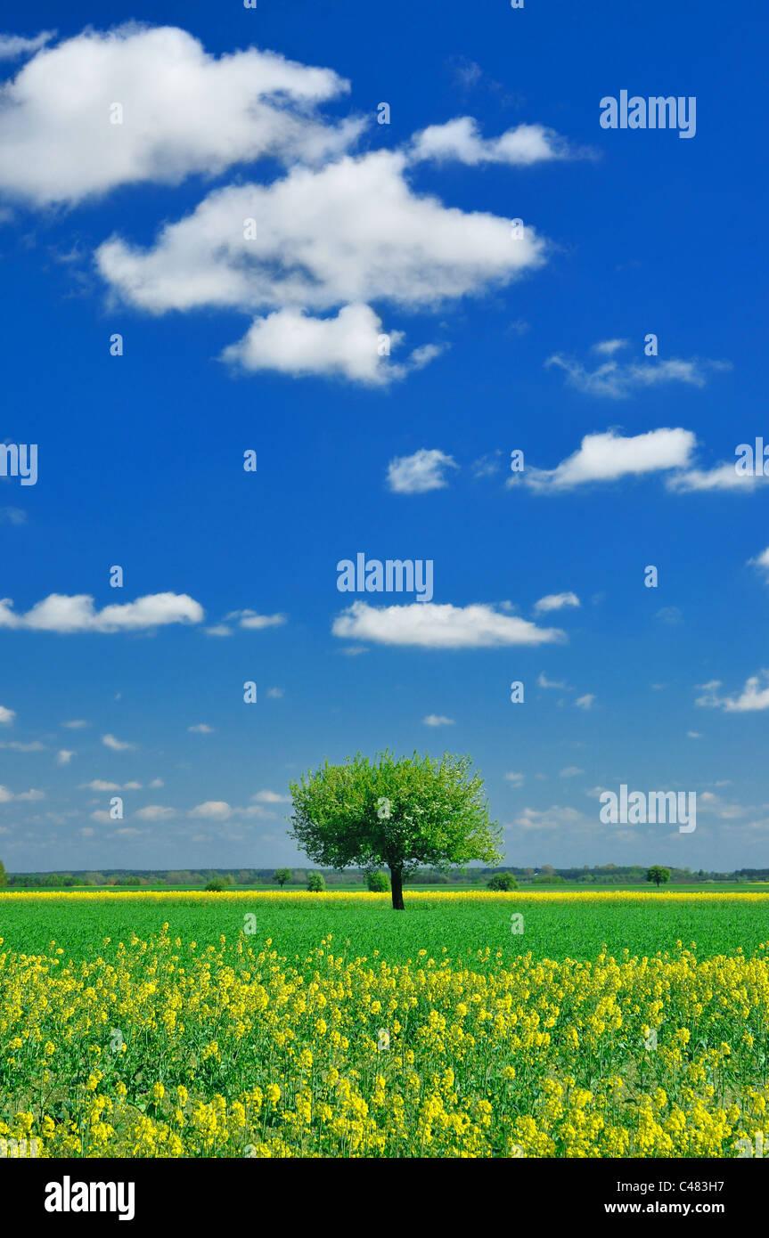 Frühling Landschaft - einsame Baum, Wiese und blauer Himmel Stockbild