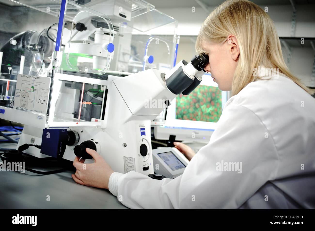 Junge blonde Wissenschaftlerin weißen Lab Coat starken Mikroskop in gut beleuchteten Wissenschaft Labor Zelle Stockbild
