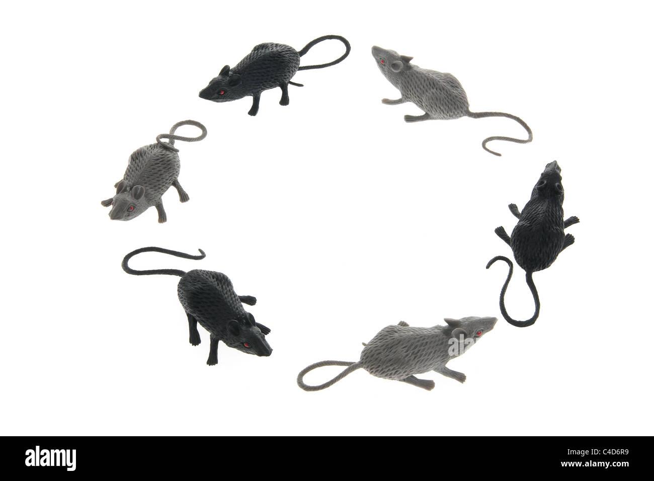 Kreis von Spielzeug Ratten Stockbild