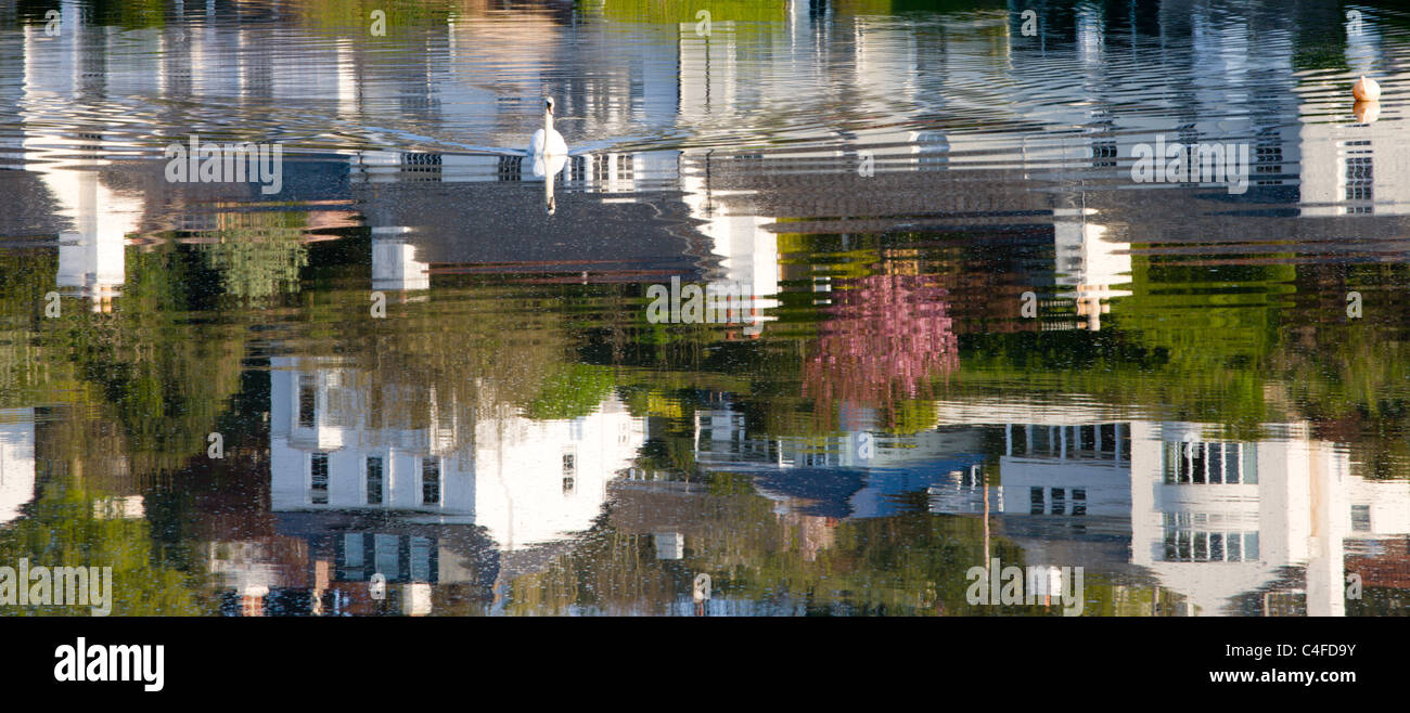 Swan und Reflexionen des Hauses an Newton Ferrers, South Hams, Devon, England. Frühjahr 2010 (Mai). Stockbild