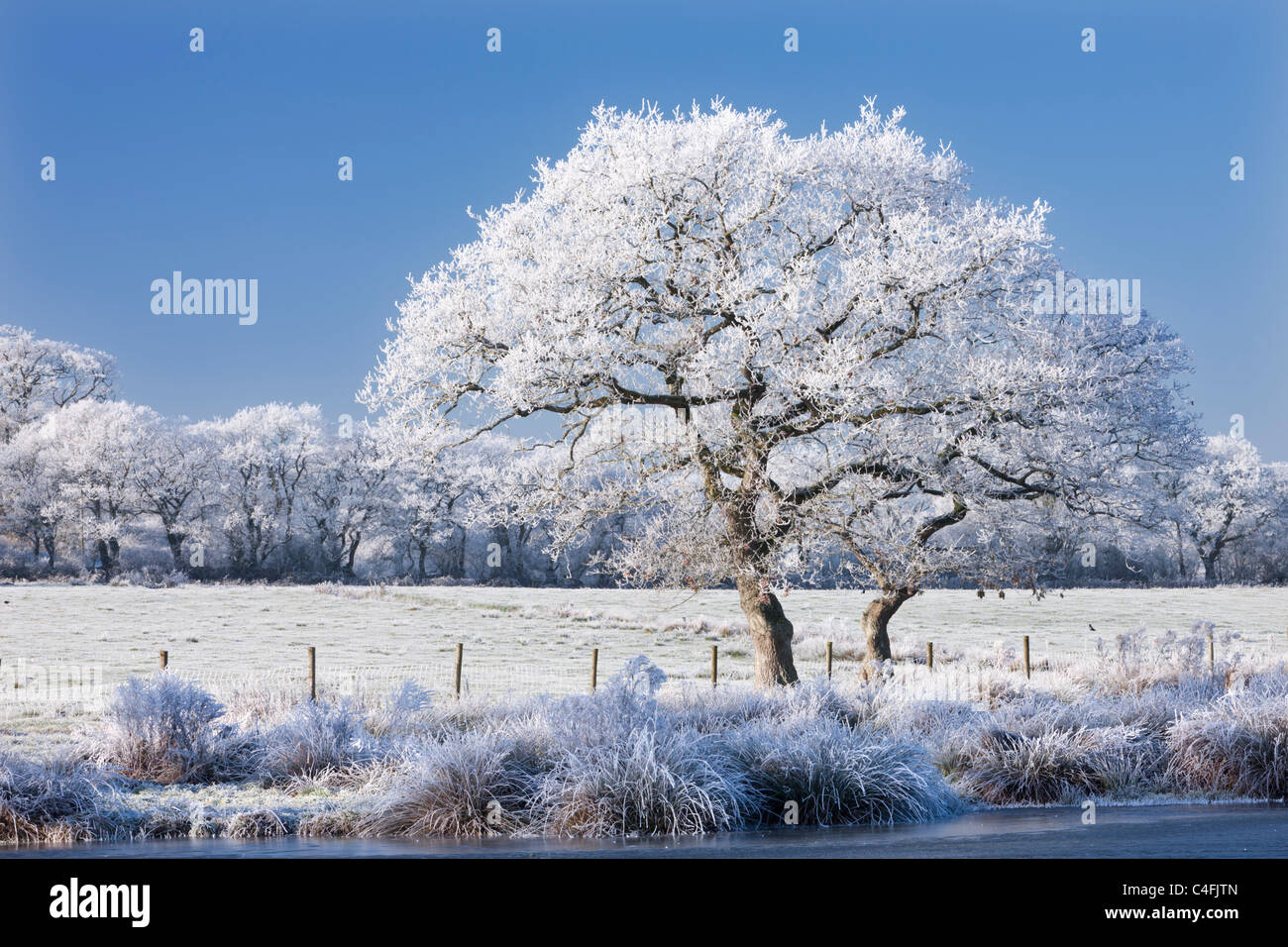 Hoar Milchglas Baum, See und Felder, Morchard Road, Devon, England. Winter (Dezember) 2010. Stockbild