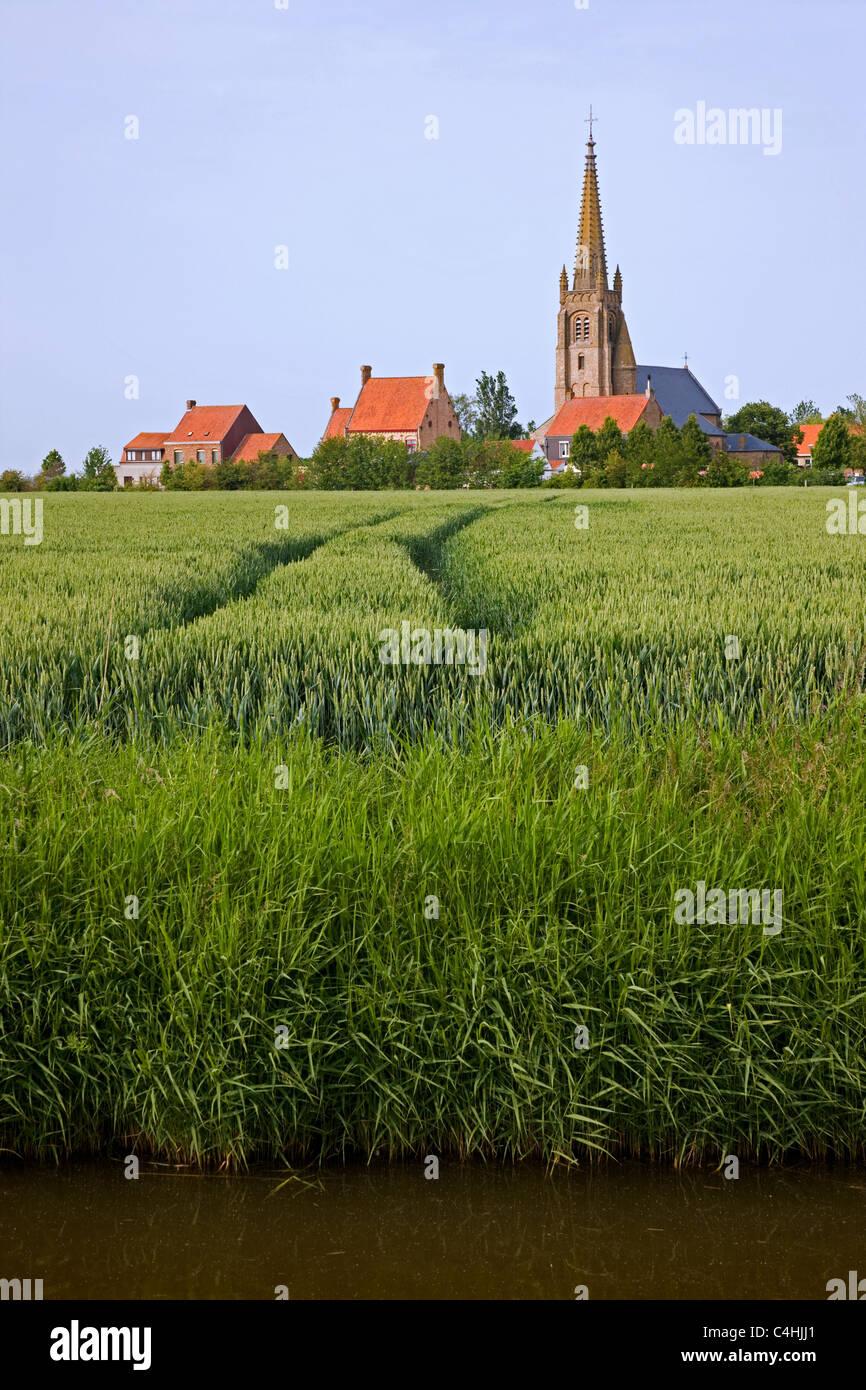 Kornfeld / Weizenfeld und Kirche Turm in Stuivekenskerke, Belgien Stockbild