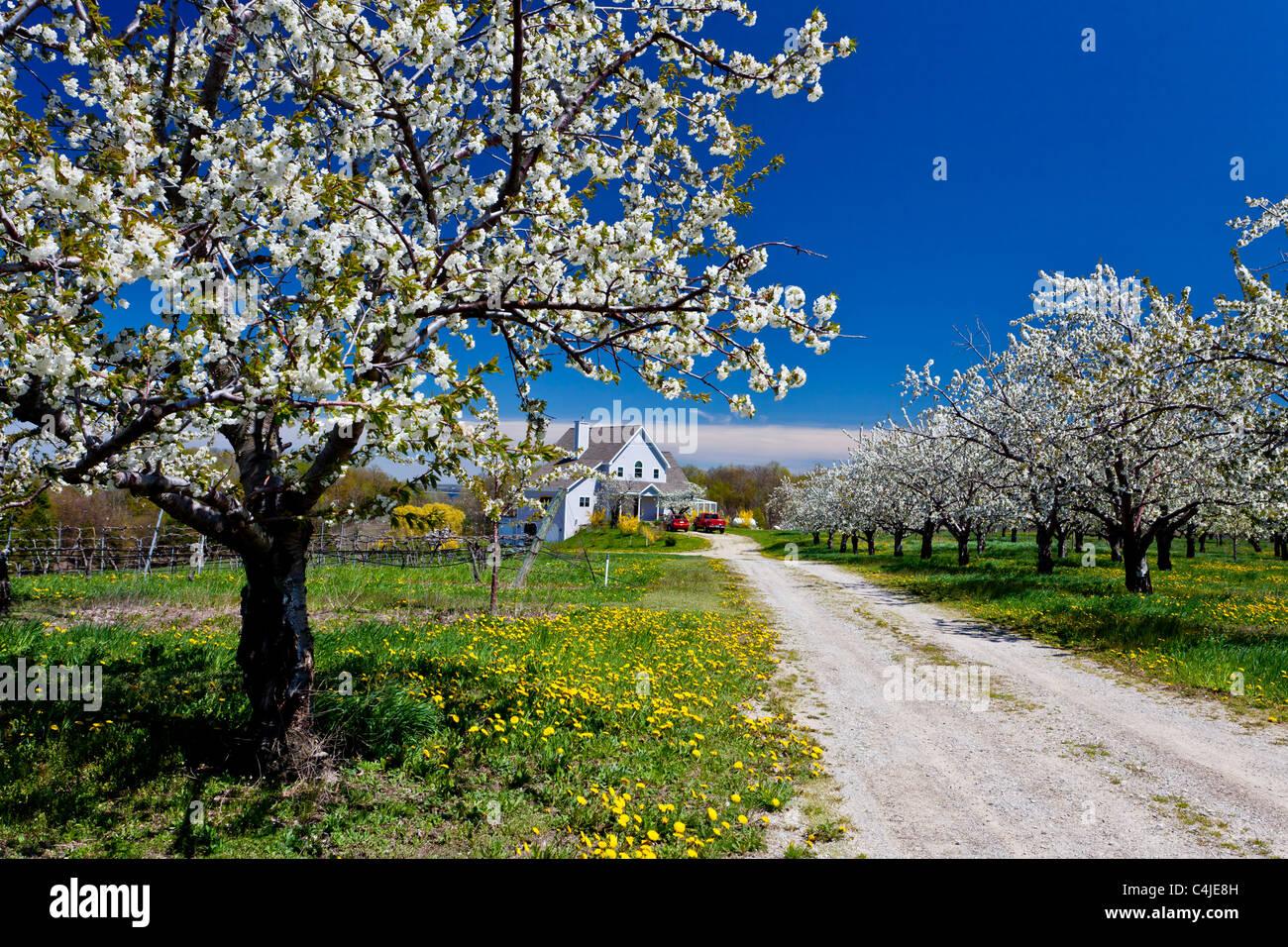 Ein Obstgarten Bauernhaus auf der alten Mission Halbinsel, Michigan, USA. Stockbild
