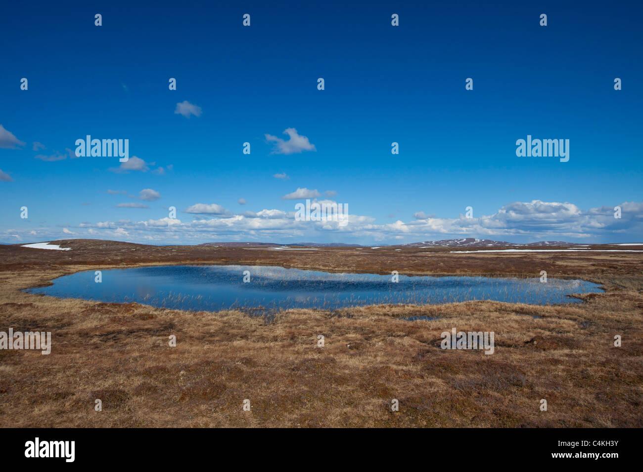 Teich im Moor am Flatruet Plateau, Härjedalen, Schweden Stockbild