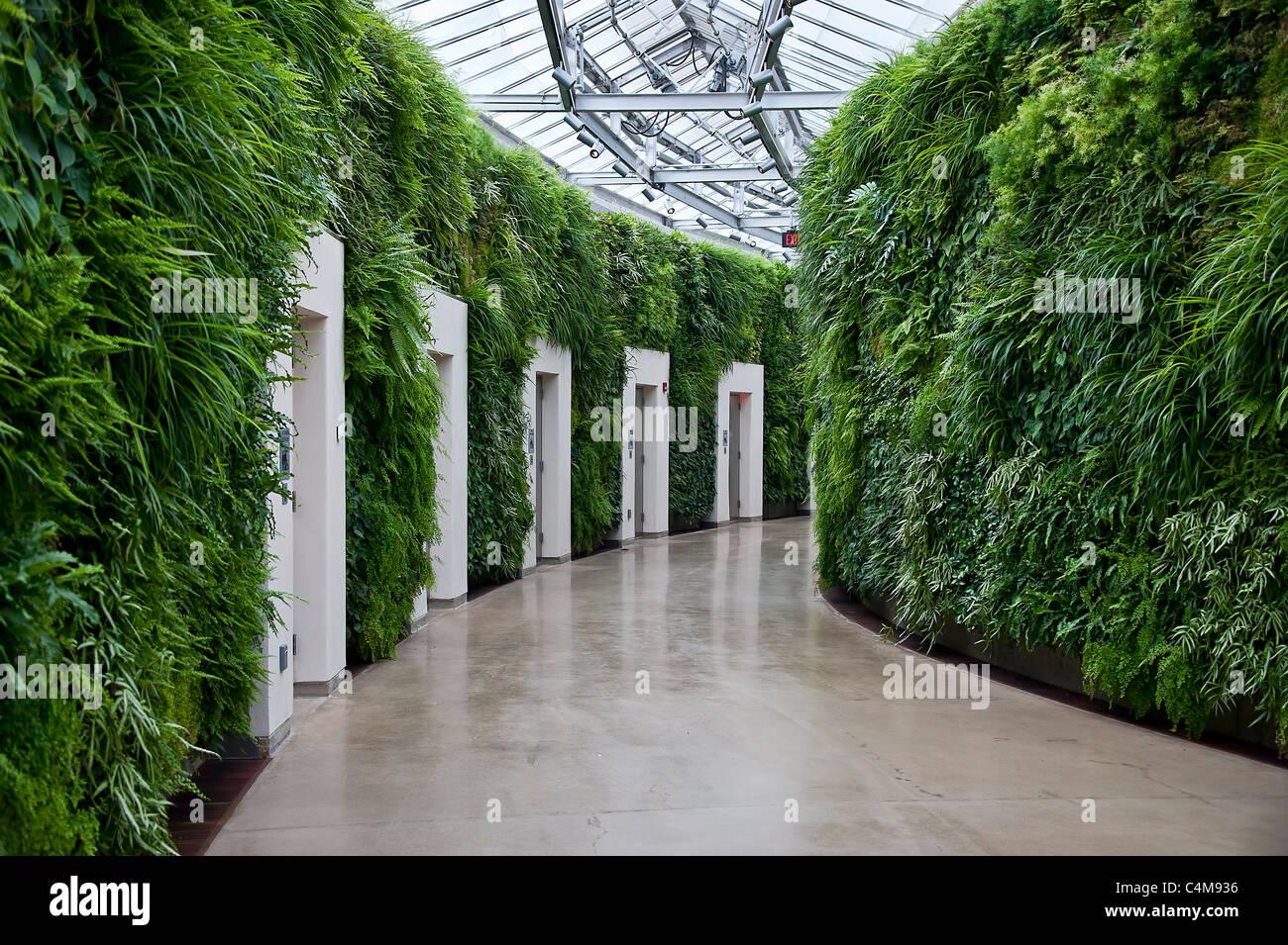 Grüne Wand im Osten Konservatorium, Longwood Gärten, Kennet Square, Pennsylvania Stockbild