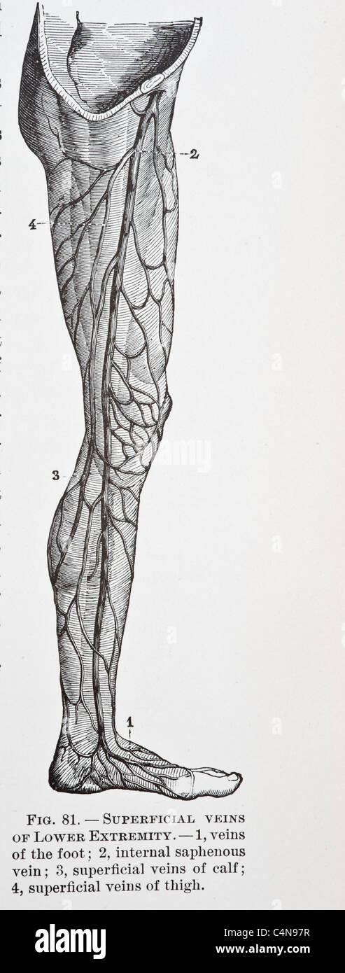 Großartig Seher Ausbildung Anatomie Und Physiologie Galerie ...