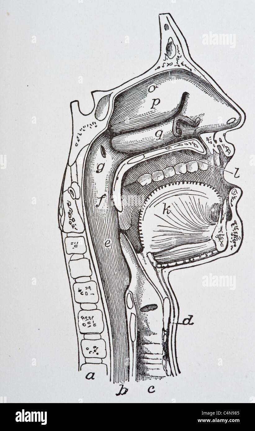 Nett Was Ist Die Beziehung Zwischen Der Menschlichen Anatomie Und ...