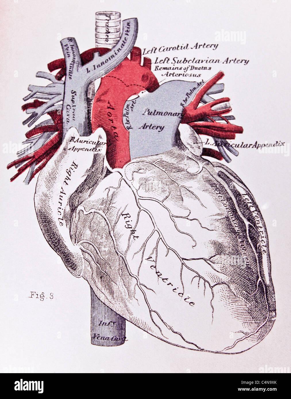 Nett Medizinische Anatomie Charts Bilder - Anatomie Ideen - finotti.info