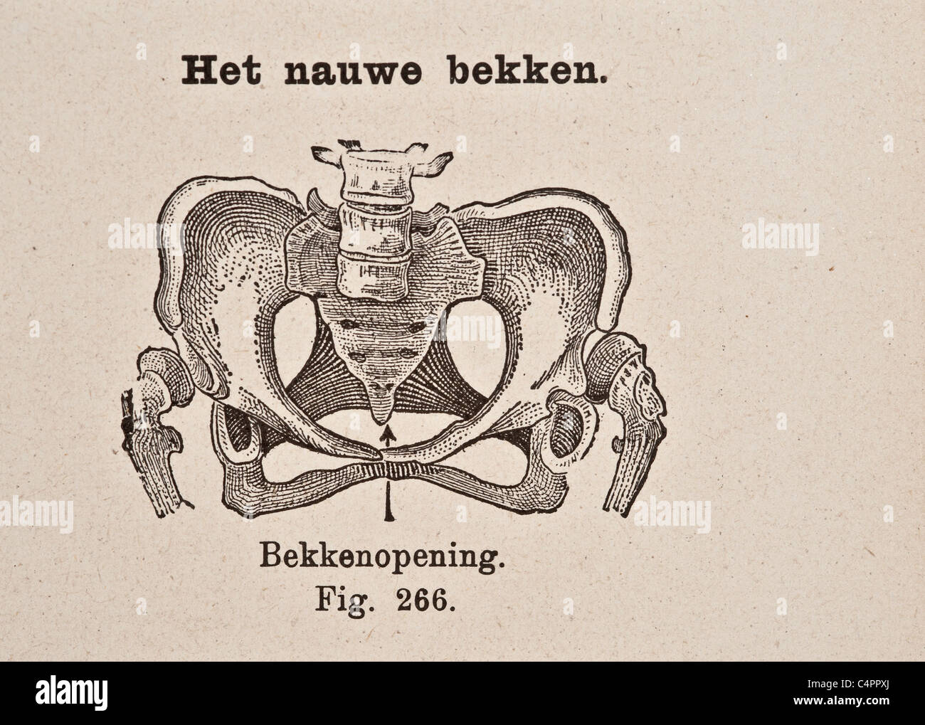 Pelvic Bone Joint Stockfotos & Pelvic Bone Joint Bilder - Alamy
