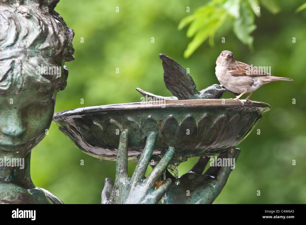 Sparrows Drinking Stockfotos & Sparrows Drinking Bilder - Alamy