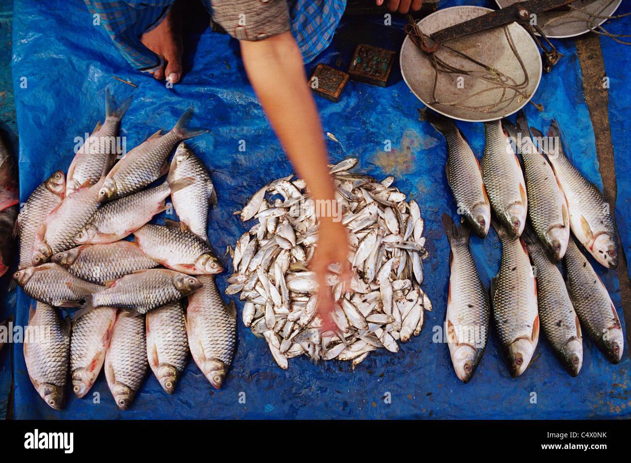 Fischmarkt, Bhatiary, Bangladesch Stockbild