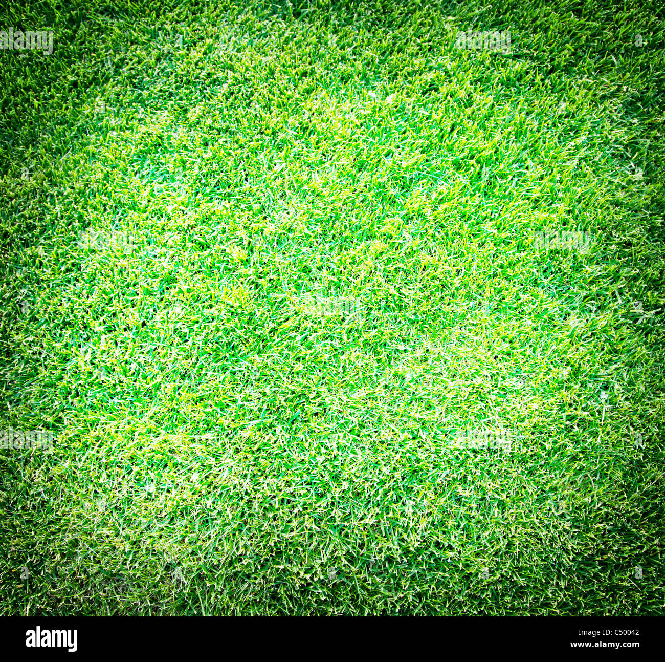 Schuss frisches Frühlingsgrün Gras hautnah. Stockbild