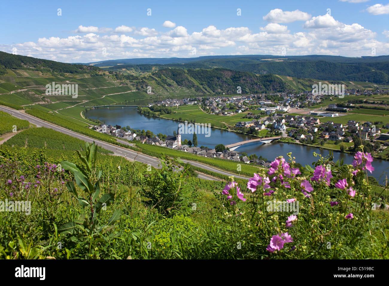 Der Weinort piesport an der Mosel, Rheinland - Pfalz, Deutschland Stockbild
