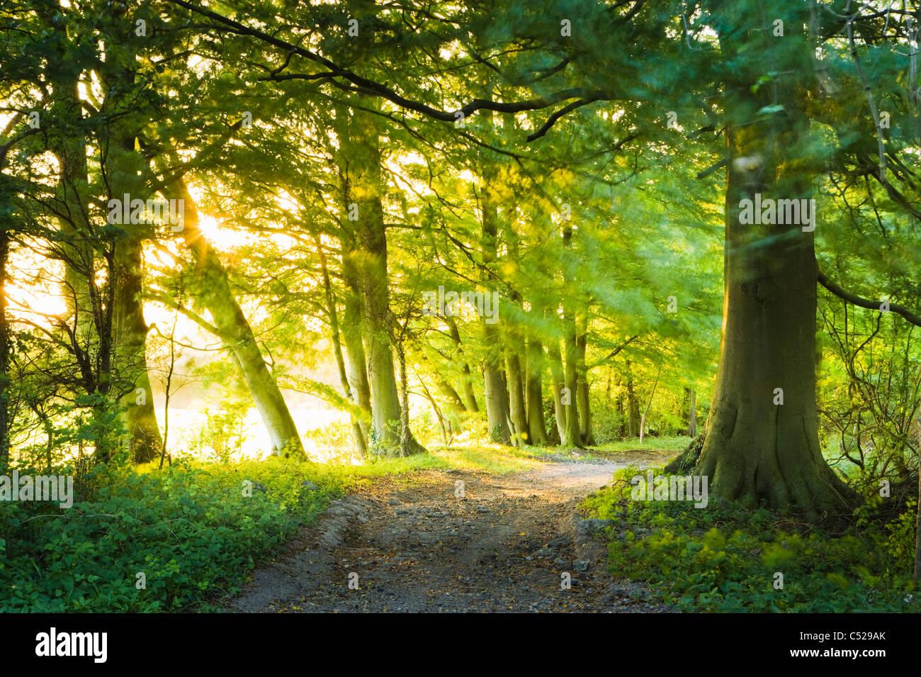 Verfolgen Sie durch Buchenwälder, in der Nähe von East Clandon, North Downs, Surrey, UK. Stockbild