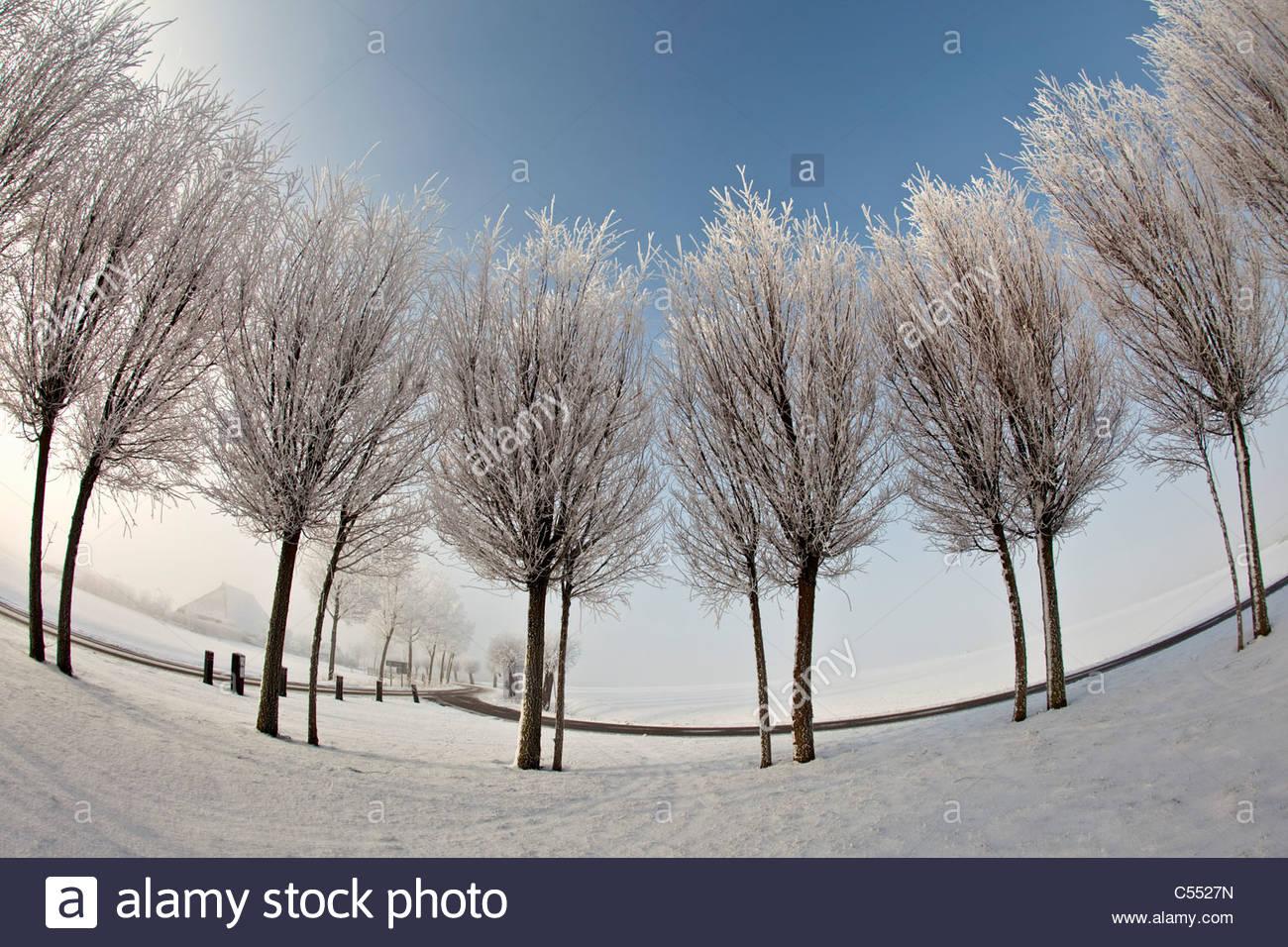Die Niederlande Ferwoude, Landstraße und Bäume im Schnee und Frost. Fischaugen-Objektiv. Stockbild