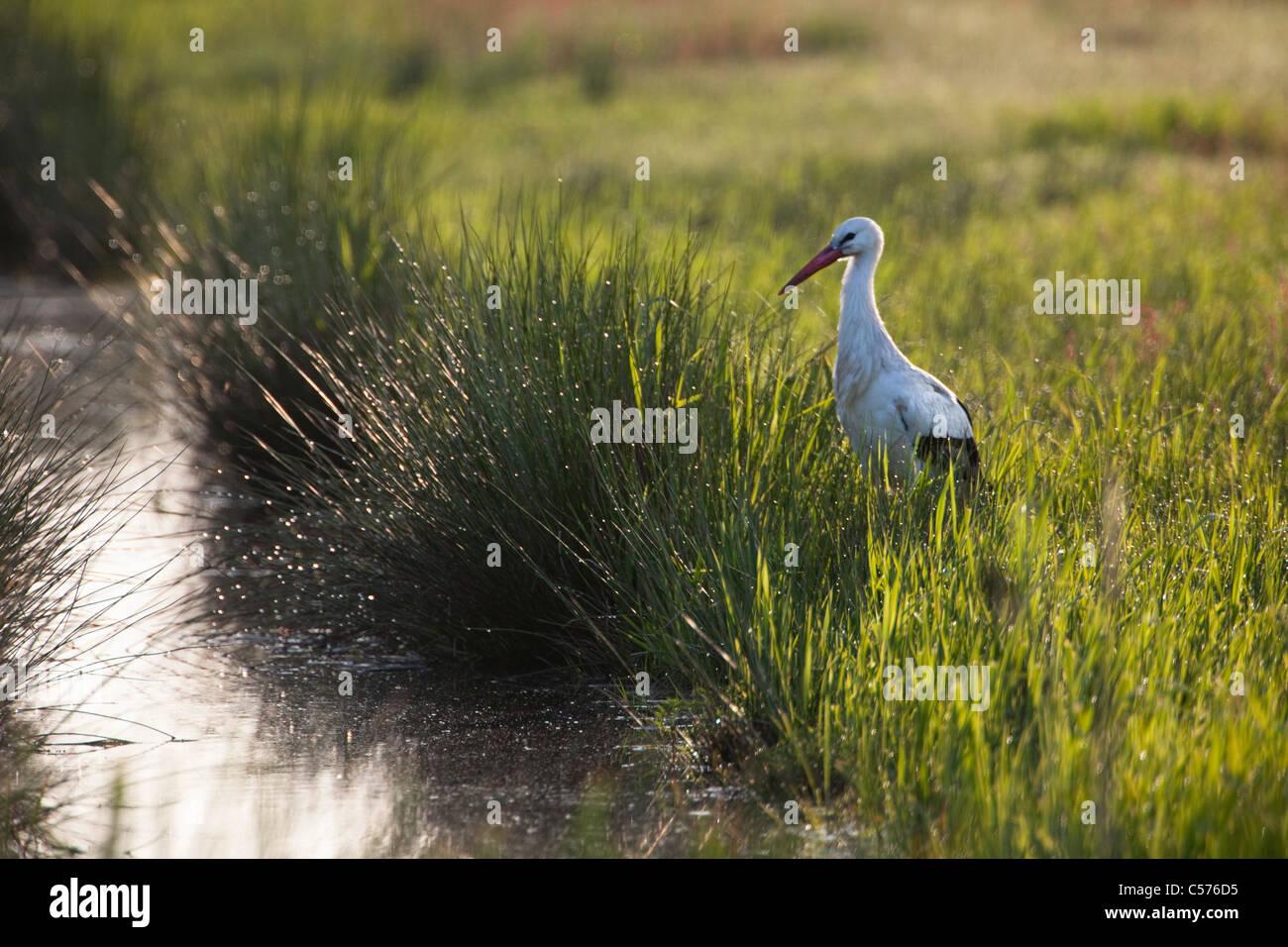 Der Niederlande, Jonen, Storch am Creek. Stockbild