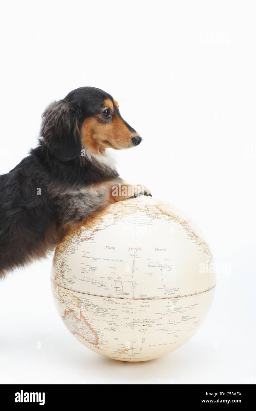 Cat And Globe Stockfotos & Cat And Globe Bilder - Alamy