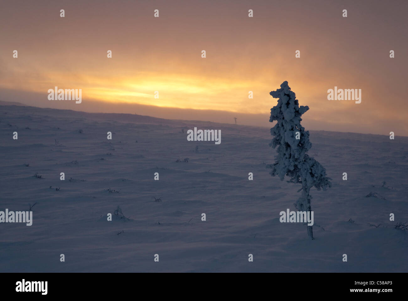 Arktis, Einsamkeit, Europa, Finnland, Fjell, Fjall, Kiilopaa, kalt, Lappland, Licht, Melancholie, Morgen, Morgendämmerung, Stockbild