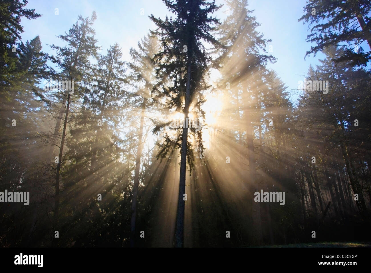 Sonne durch Morgennebel und Bäume; Happy Valley, Oregon, Vereinigte Staaten von Amerika Stockbild