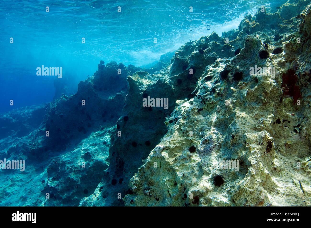 Urchin Brachland in küstennahe Zone der Küste in Kas Antalya Türkei. Seeigel Prädation verhindert Stockbild