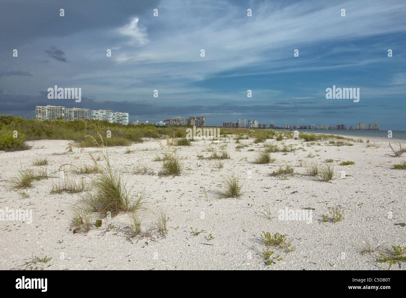 Vegetation auf das Dünengebiet von Tigertail Beach Marco Island, Florida Stockbild