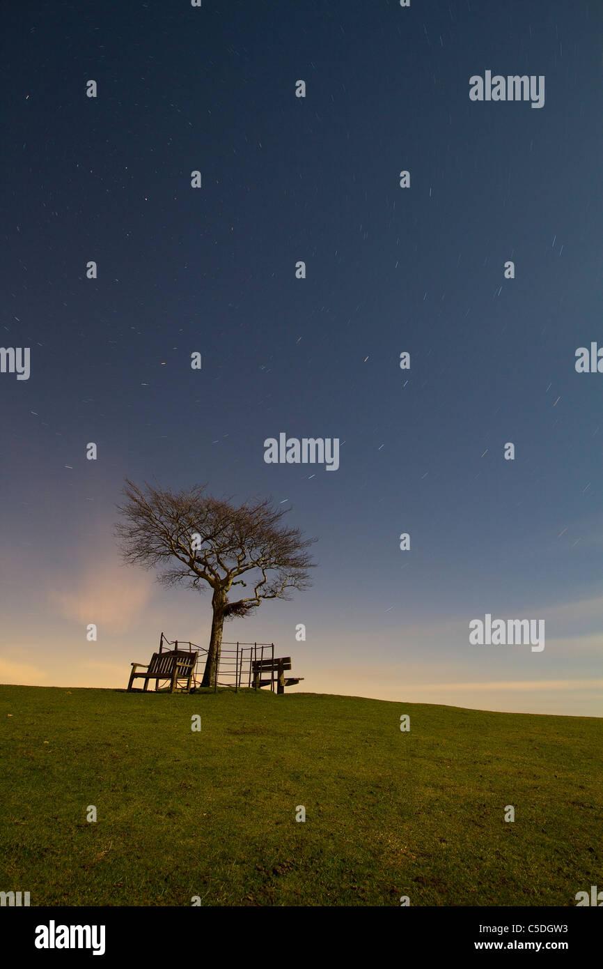Sterne Rotation um ein einsamer Baum auf Cleeve Hill, Cheltenham Stockbild
