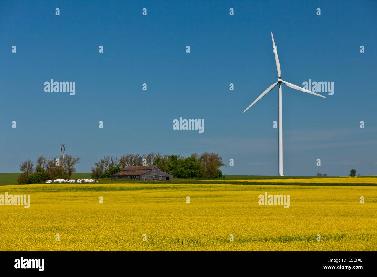 Eines elektrischen Windparks mit Raps Feld in der Nähe von St. Leon, Manitoba, Kanada. Stockbild