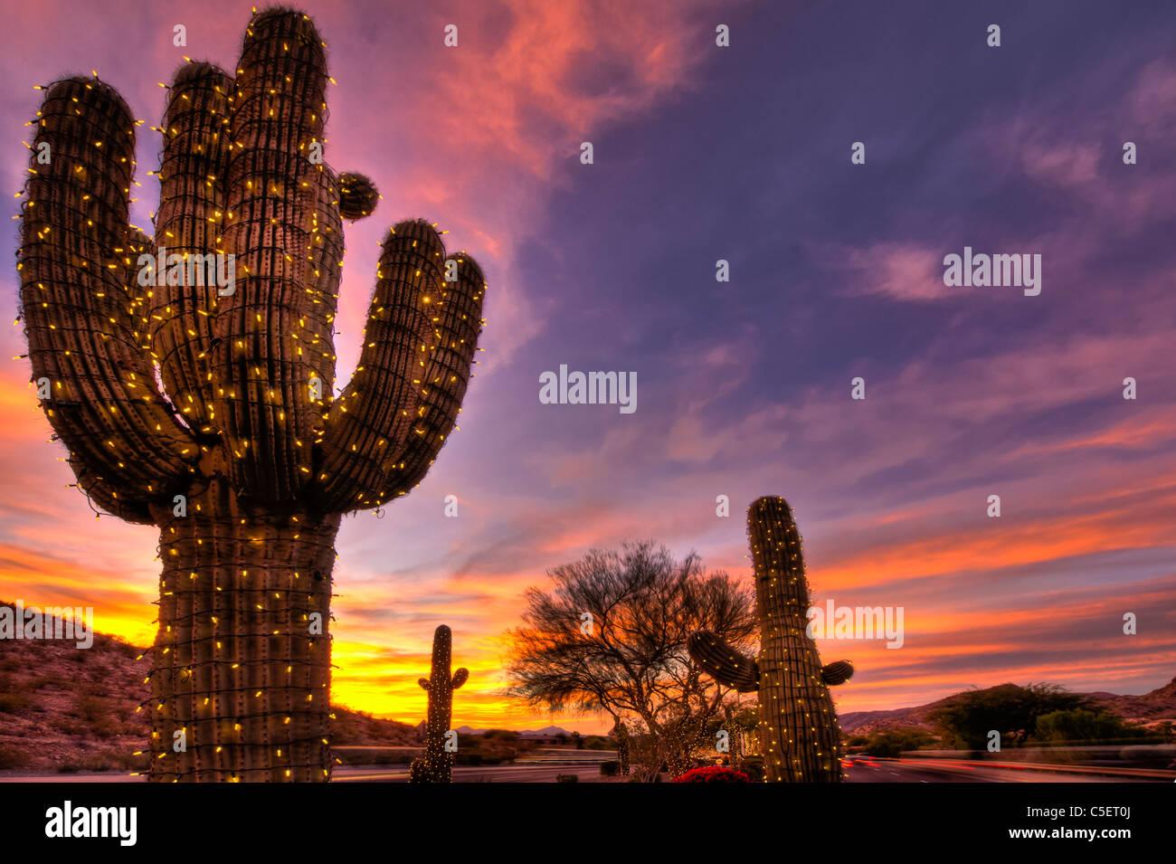 Diese riesigen Saguaro-Kaktus bedeckt gewesen in Weihnachtsbeleuchtung für die Weihnachtszeit in Phoenix, AZ Stockfoto