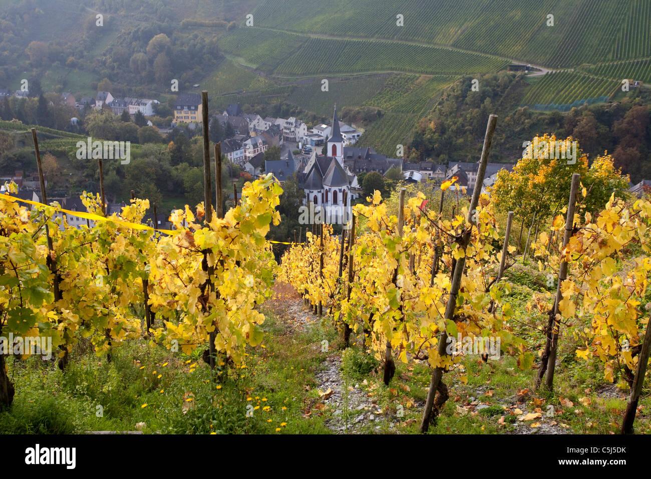 Weinberge Im Herbst Traben-Trarbach Mosel, Weinberg im Herbst fallen an Mosel Stockbild