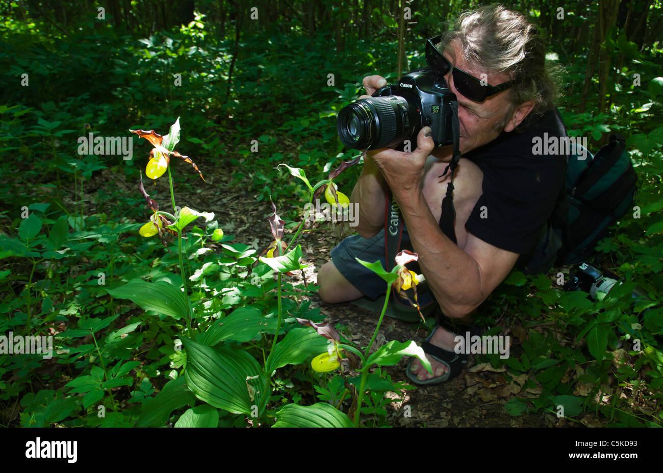Fotografie Natur Fotografen fotografieren Dame rutscht Orchideen Schweden Stockbild