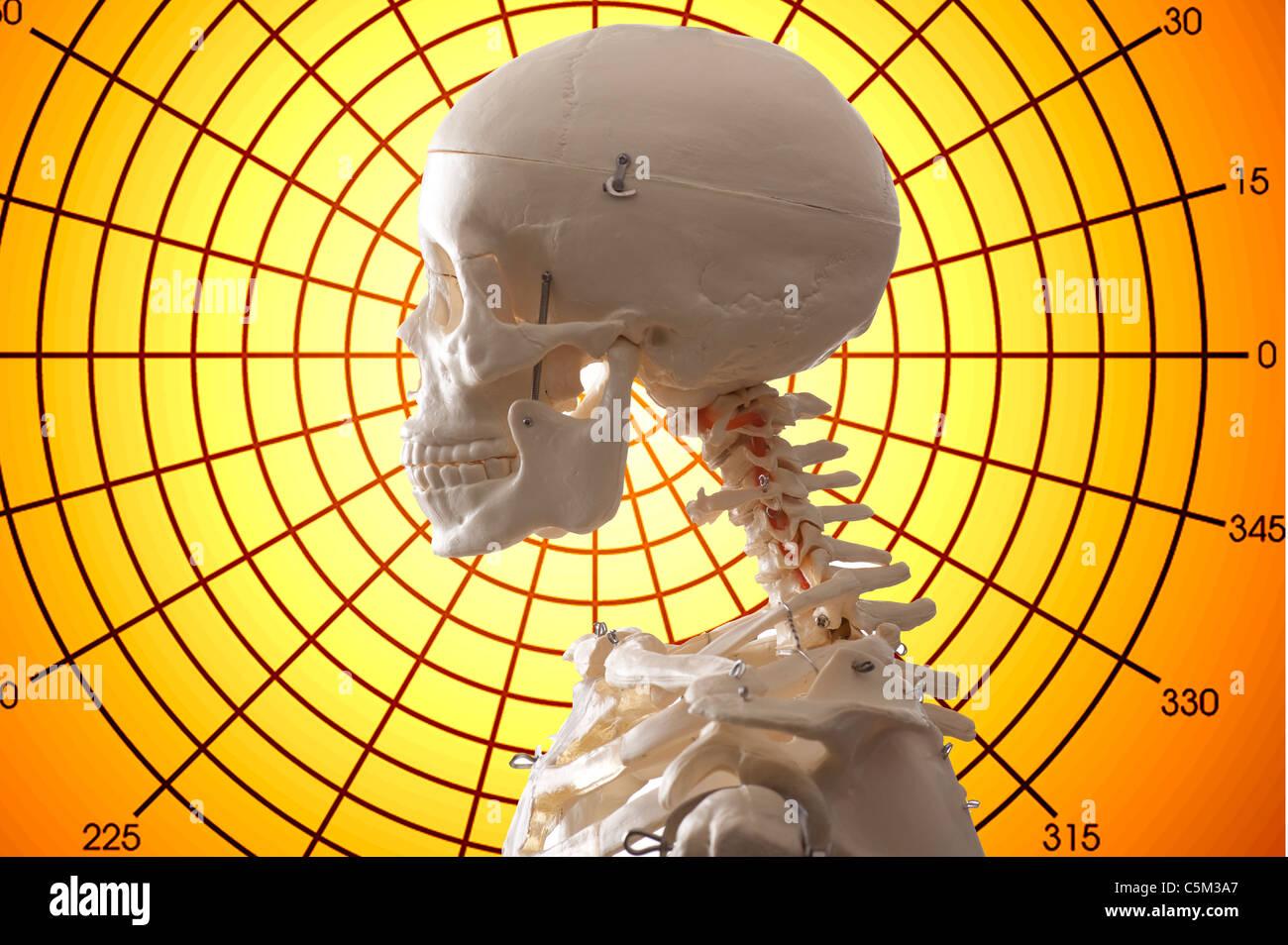 menschliches Skelett und medizinische Diagrammhintergrund Stockbild
