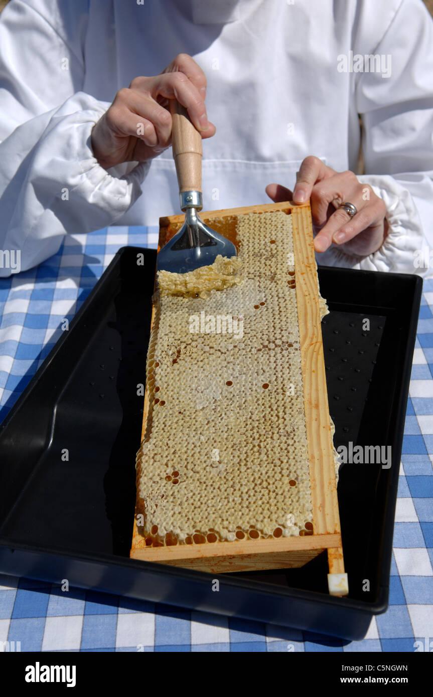 Entdeckeln einen Rahmen von Honig Kamm Stockfoto, Bild: 37968273 - Alamy