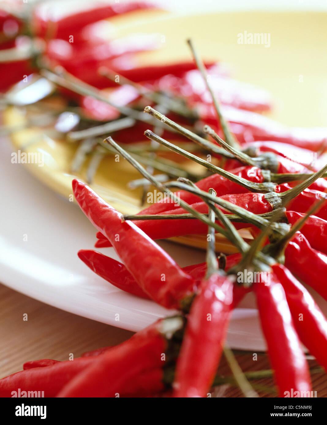 Eine Kette mit roten Chili-Schoten Stockbild