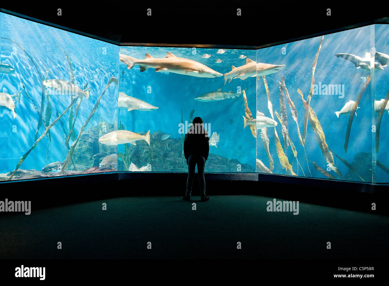 Fish stand stockfotos fish stand bilder alamy for Aquarium torremolinos