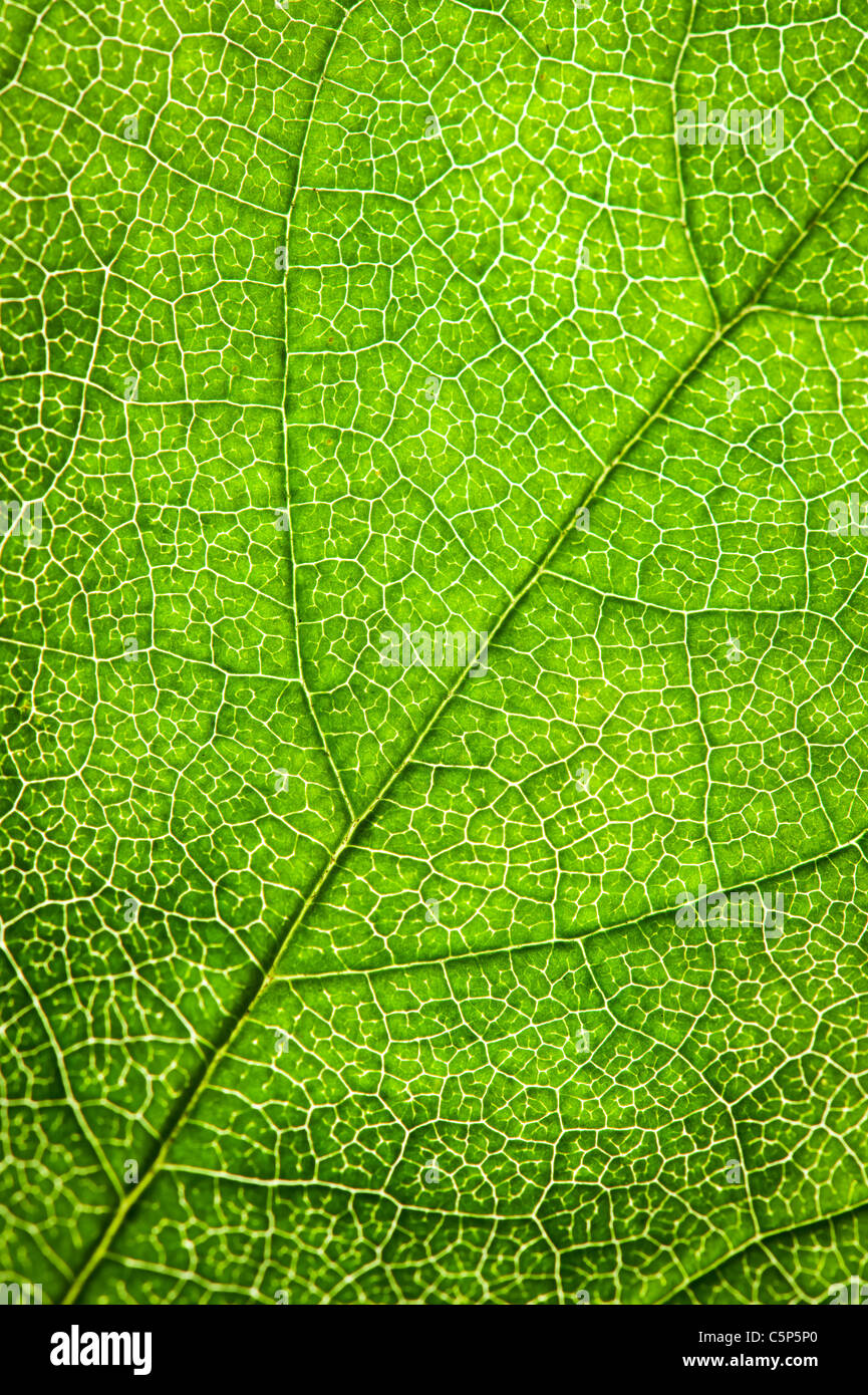 grünes Blatt-Textur Stockbild