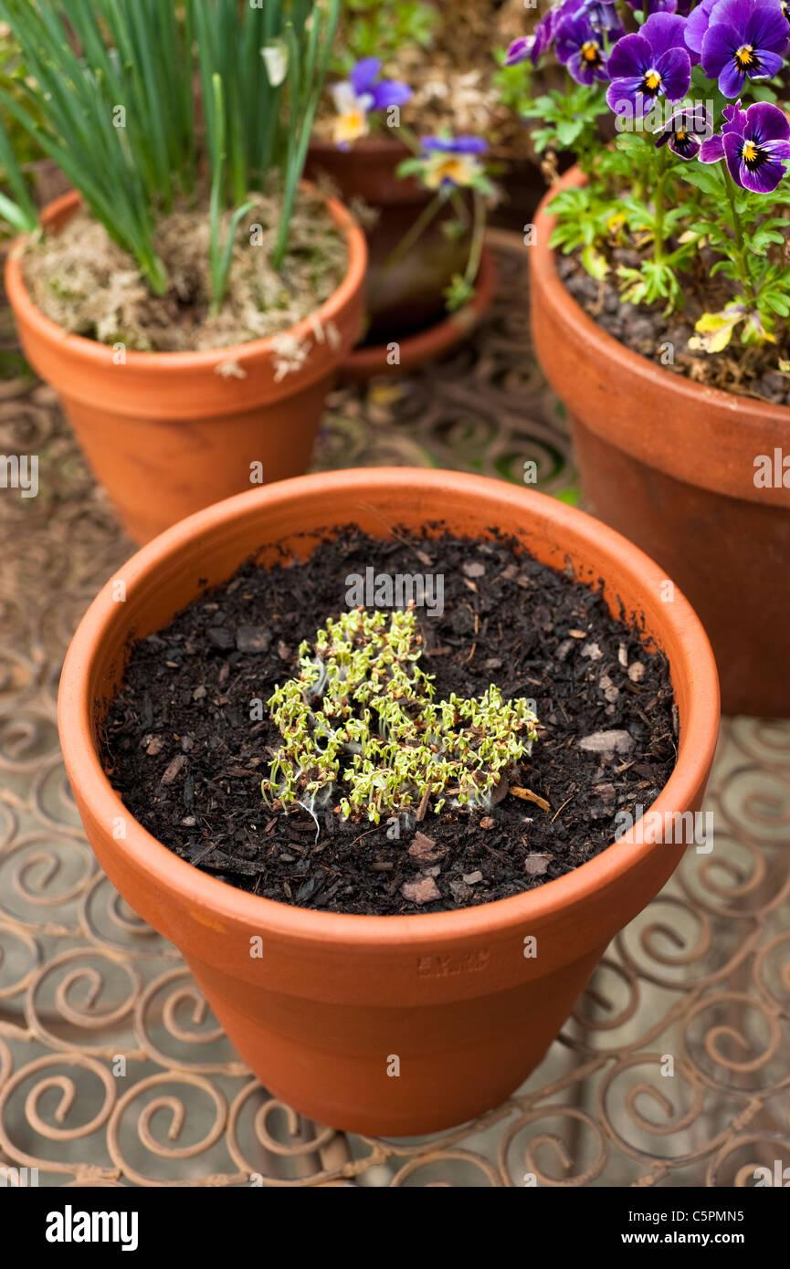 seeds sprouting stockfotos seeds sprouting bilder seite 6 alamy. Black Bedroom Furniture Sets. Home Design Ideas