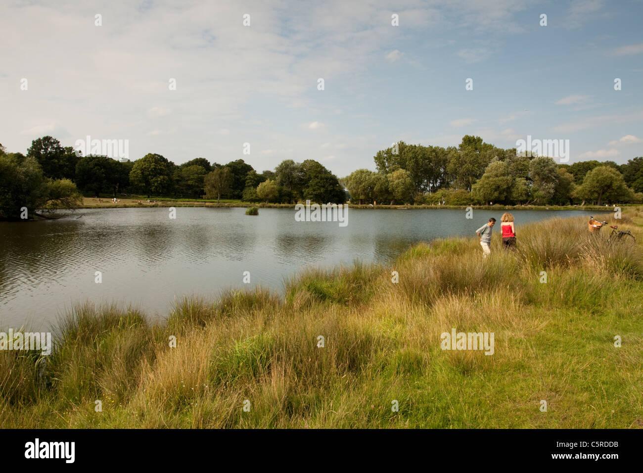 Richmond park Teich/See, Surrey, England, UK Stockbild