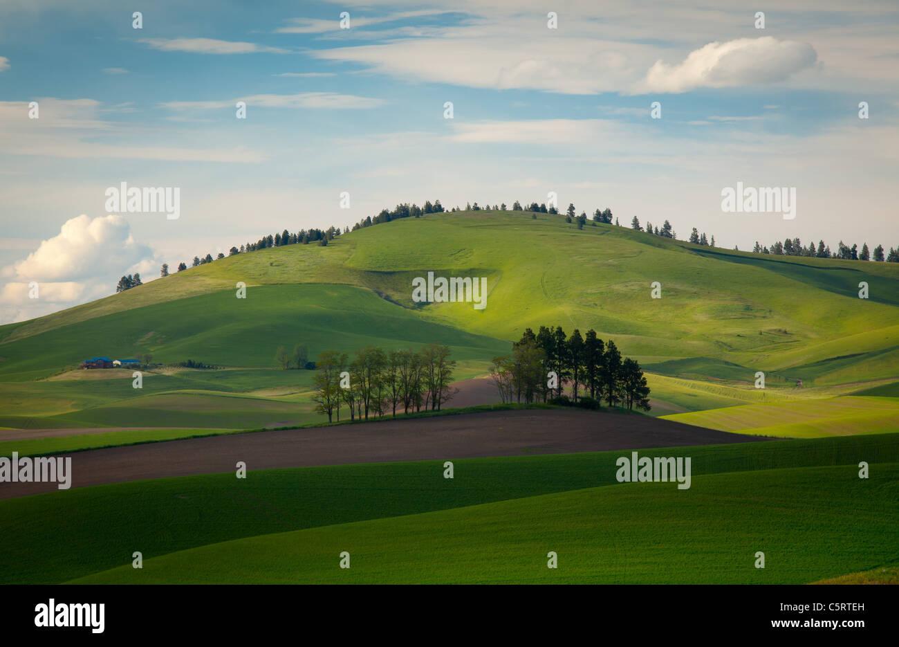 Palouse Landschaft Stockbild