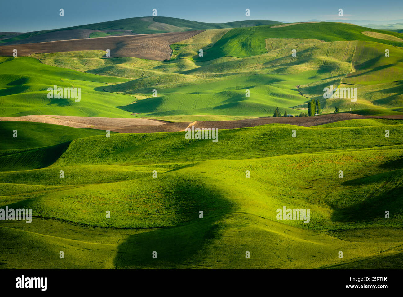 Palouse Landschaft von Steptoe Butte State Park in Washington State, USA Stockbild