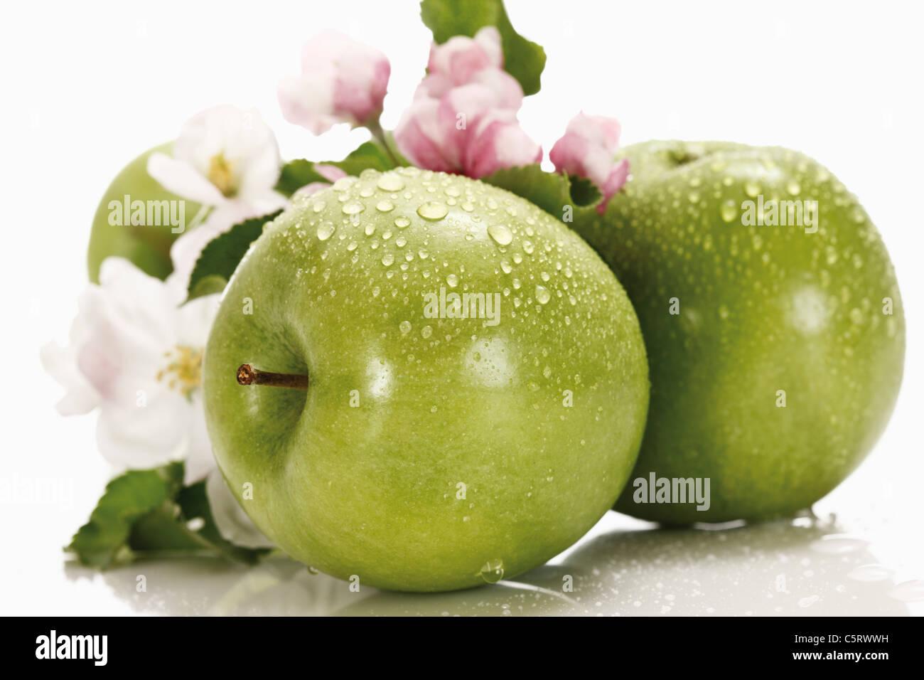 Grüne Äpfel mit Wassertropfen im Hintergrund Apfelblüte, Nahaufnahme Stockbild