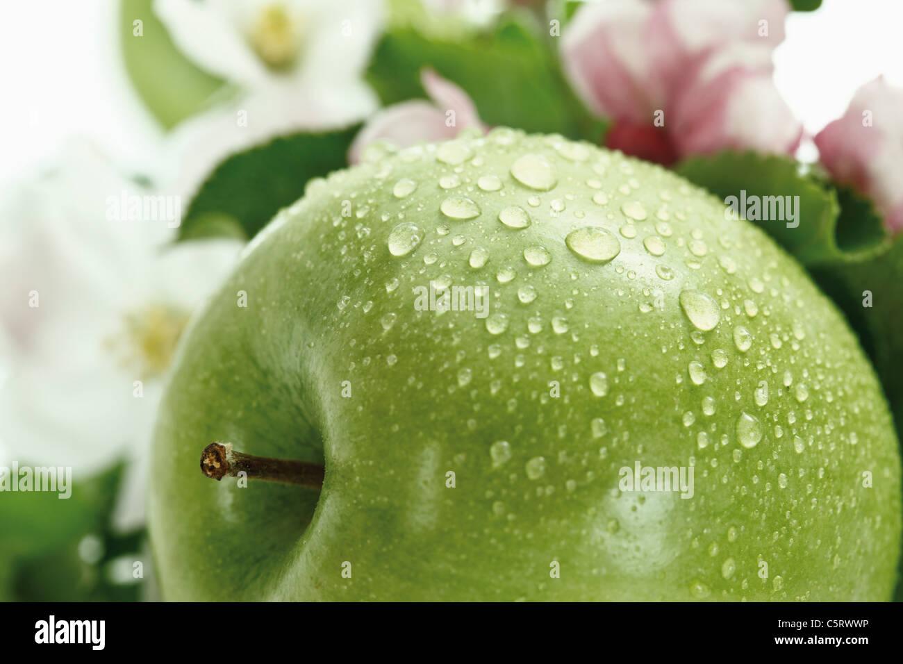 Grüner Apfel mit Wassertropfen im Hintergrund Apfelblüte, Nahaufnahme Stockfoto